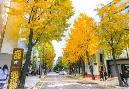 【韓國首爾景點】江南區購物必逛:江南地下街、新沙洞銀杏林蔭大道攻略