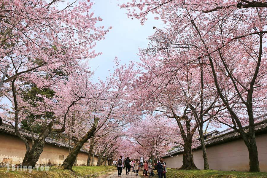 【京都賞櫻景點】醍醐寺:世界⽂化遺產的櫻花之旅(交通攻略)