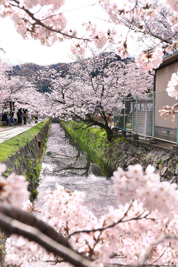 京都哲學之道