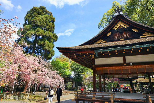 【京都賞櫻景點】平野神社:花種高達50種之多,號稱最長花季的免費櫻花名所