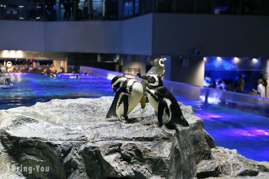 【東京晴空塔】墨田水族館:看企鵝和海狗的押上雨天室內親子景點