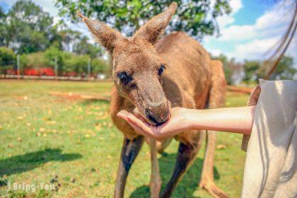 【澳洲昆士蘭】可以摸無尾熊、喂跳跳袋鼠的動物園:Snakes Downunder Reptile Park and Zoo