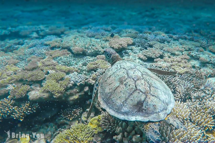 【澳洲昆士蘭】大堡礁浮潛三日遊行程規劃,追尋海龜、遨遊魚群珊瑚礁間