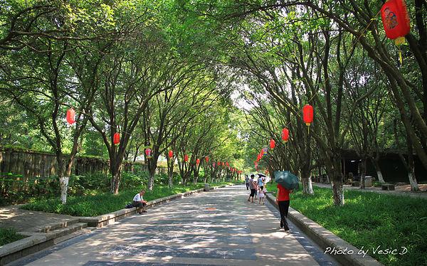 【桂林自由行】桂林市區 ☞ 七星公園漫步迎面撲來桂樹香