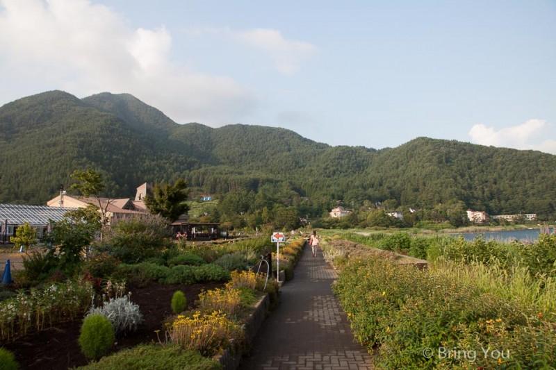 富士山河口湖大石公園薰衣草