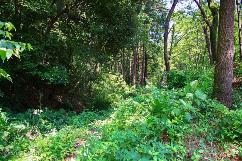龍貓森林-16