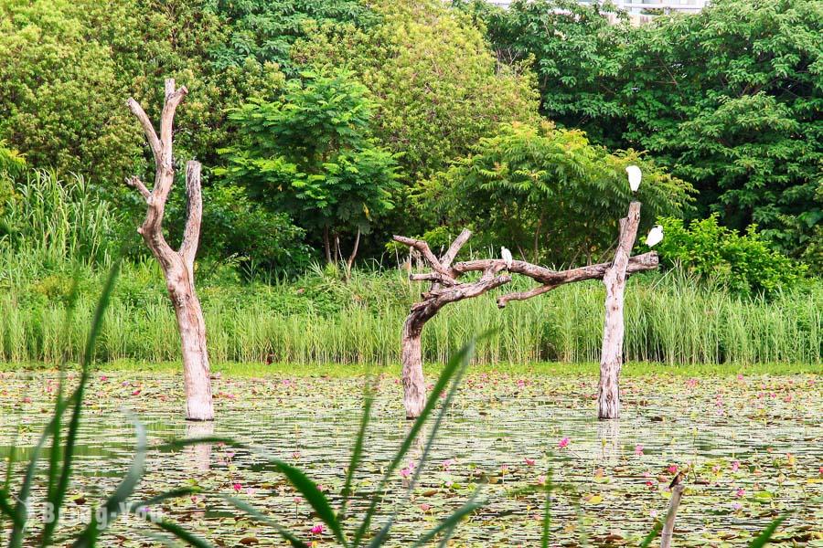 【高雄左營區景點】洲仔濕地公園:蓮池潭附近生態資源豐富的賞鳥景點