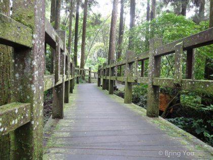 【嘉義】奮起湖好玩美食搜集(上) ☞ 森林浴篇