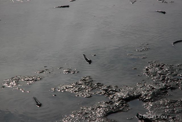 高雄旅遊景點 茄萣 濕地-39