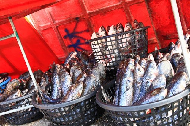 【高雄年度活動】30元烏魚 & 免費烏魚料理 & 免費濕地導覽 ☞ 茄萣烏魚海鮮美食節