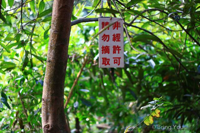 大樹美食 紅豆咖啡-10