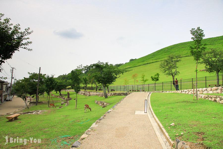 【奈良旅遊景點】若草山: 山坡放牧的打盹鹿群們
