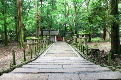 【奈良旅遊景點】春日大社(白鹿動物籤、乳房神社、鹿苑)