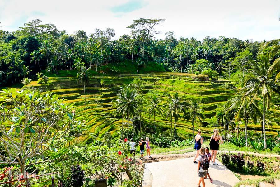 德哥拉朗梯田Tegallalang Rice Terrace