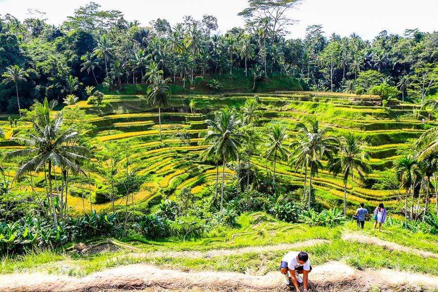 【峇里島中北部一日遊】包車行程安排建議:德哥拉朗梯田 & 巴杜爾火山 & 聖泉廟 & 烏布