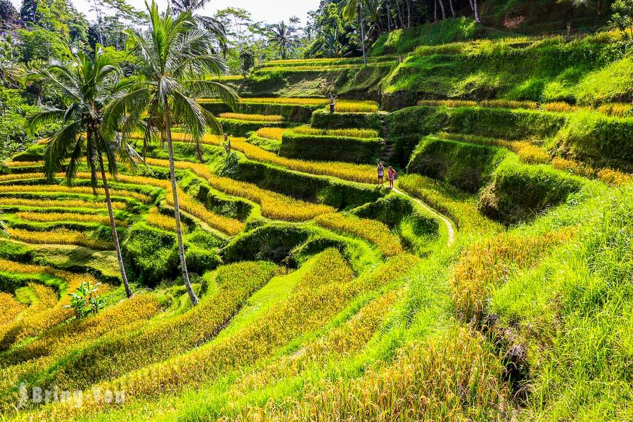【峇里島世界遺產】德哥拉朗梯田Tegallalang Rice Terrace:小而美的網美打卡景點