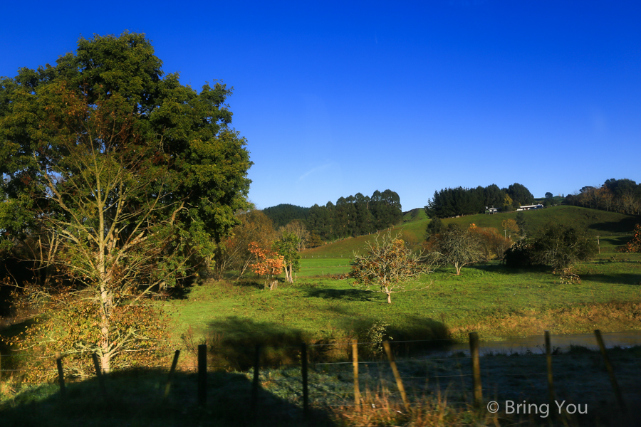 newzealand-headfirst-2