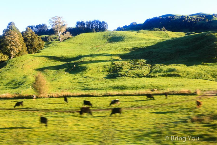 newzealand-headfirst-3