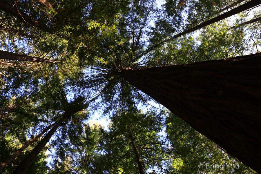 rotorua-redwood-18