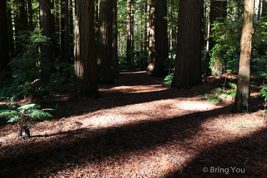 rotorua-redwood-19