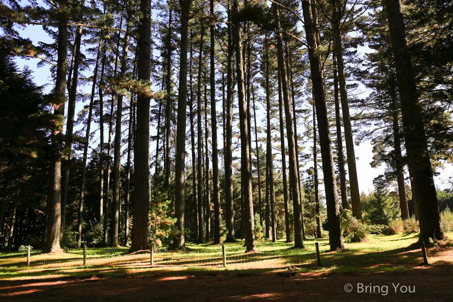 rotorua-redwood-7