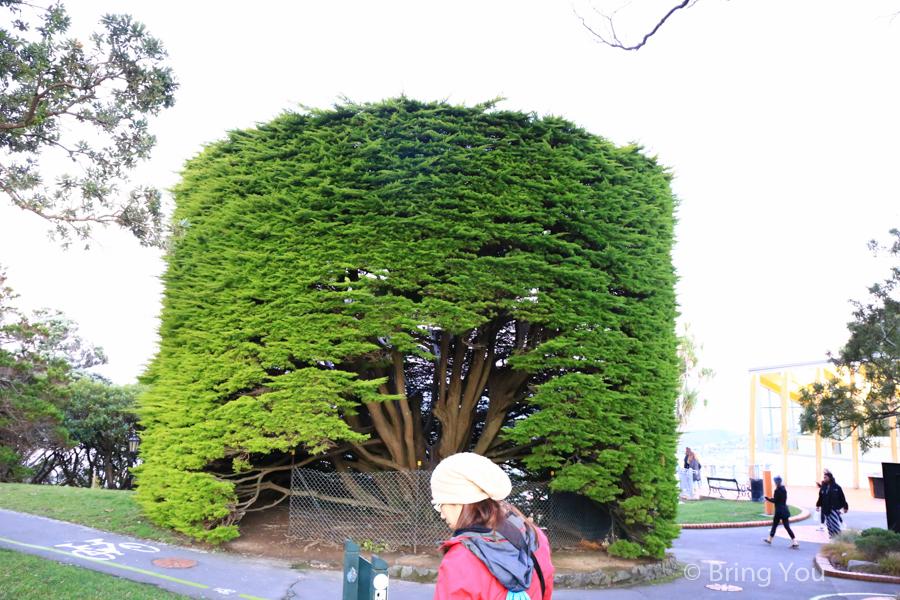 wellington-botanic-garden-2