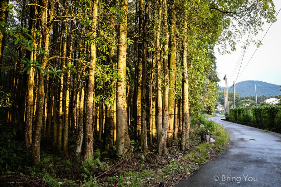 nantou-forest-2