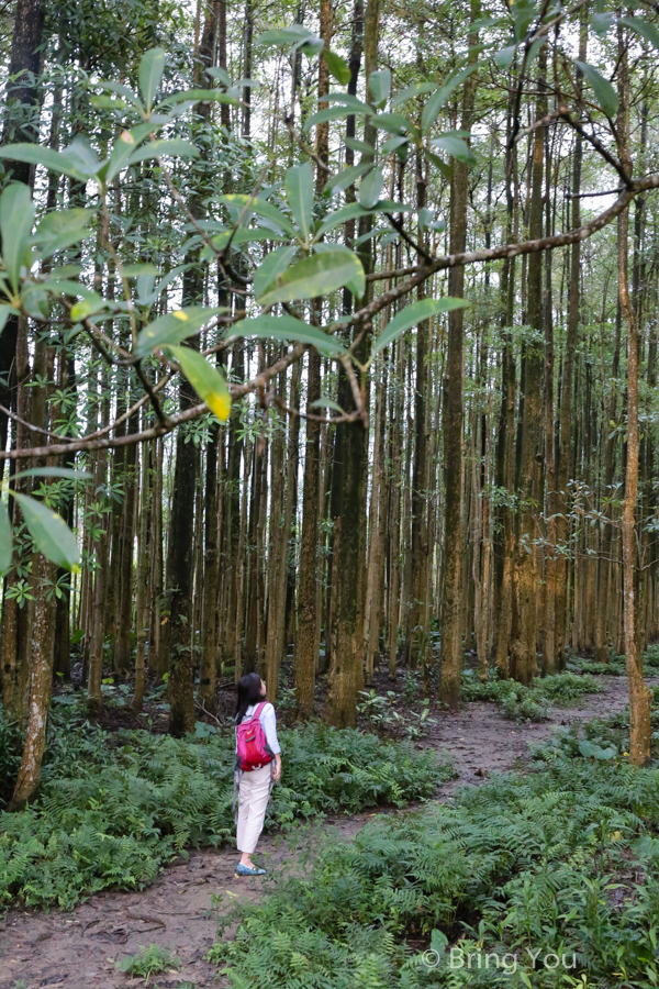 nantou-forest-4