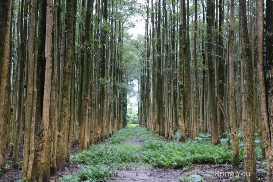 nantou-forest-5