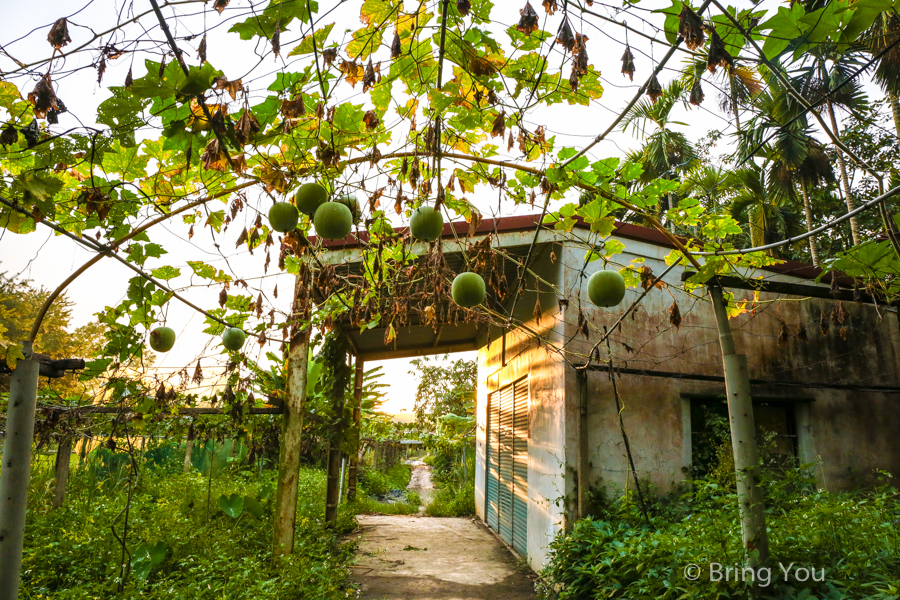 nantou-forest