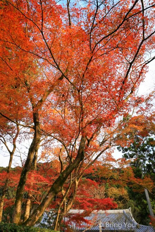 kyoto_maple_leaf-4