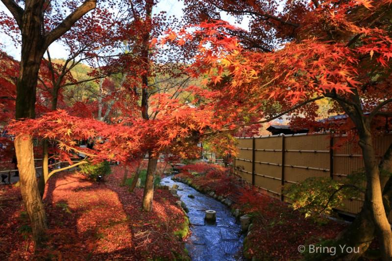 kyoto_maple_leaf-6