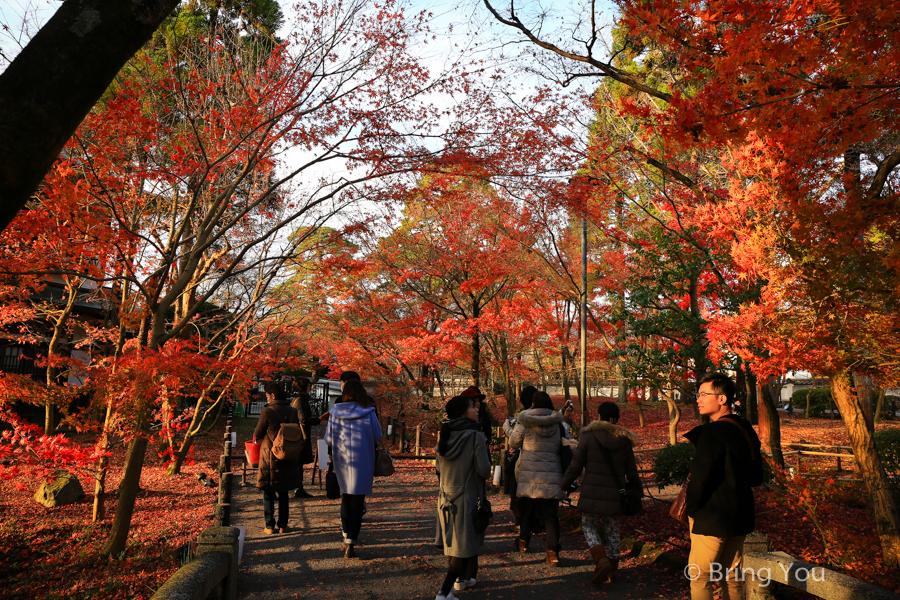 kyoto_maple_leaf-7