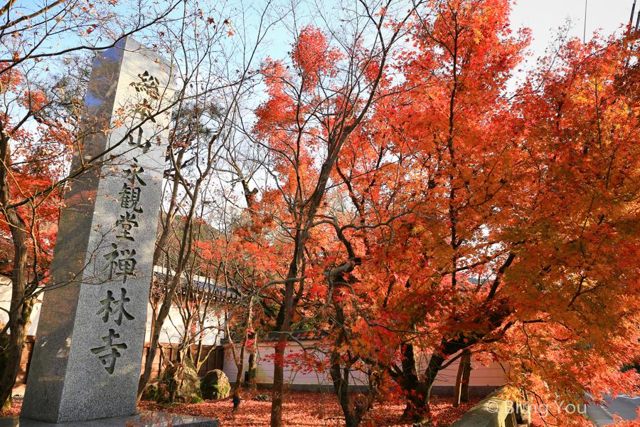kyoto_maple_leaf