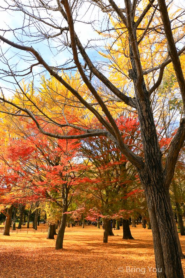 maple_leaf-9