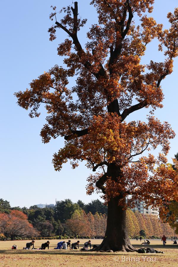Shinjuku-Gyoen-National-Garden_-10