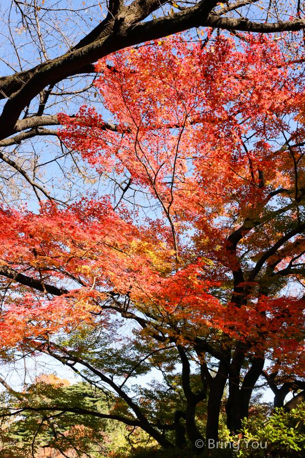 Shinjuku-Gyoen-National-Garden_-14