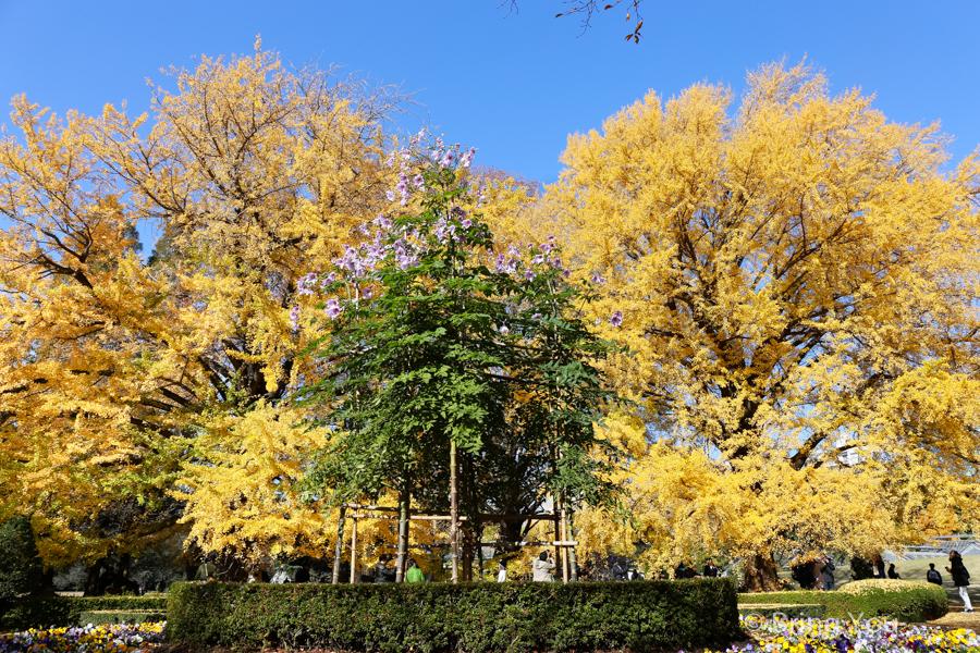 Shinjuku-Gyoen-National-Garden_-8
