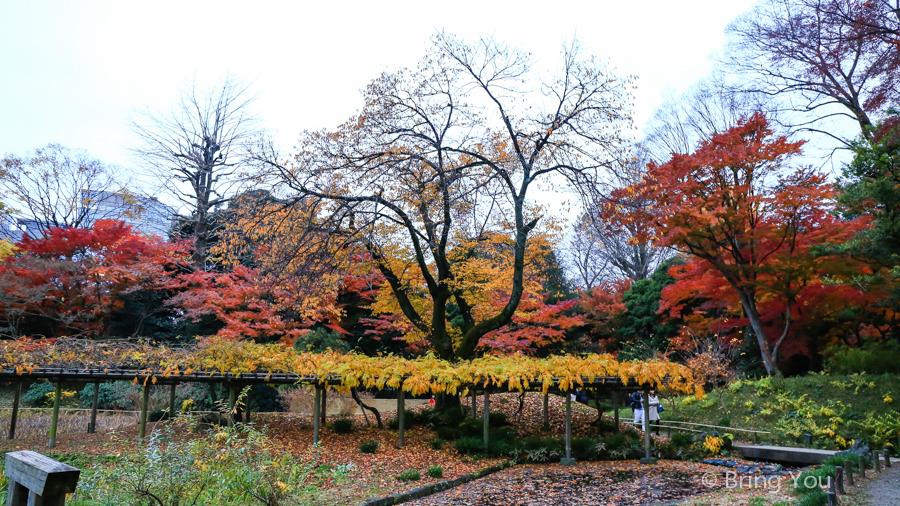koishikawa-garden-15