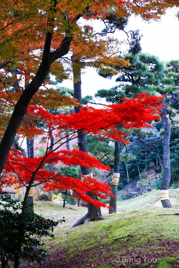 koishikawa-garden-17