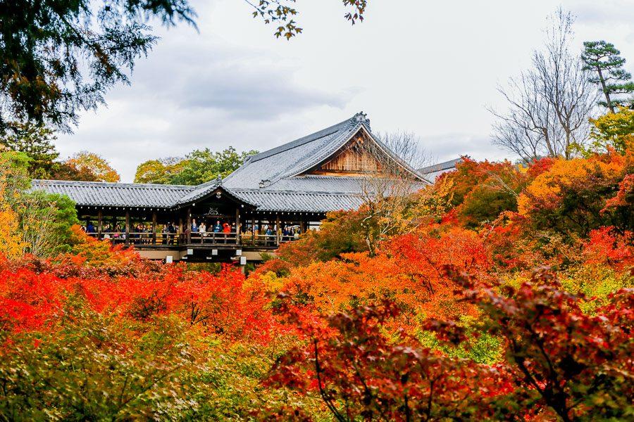 京都、大阪觀光一日券二日券
