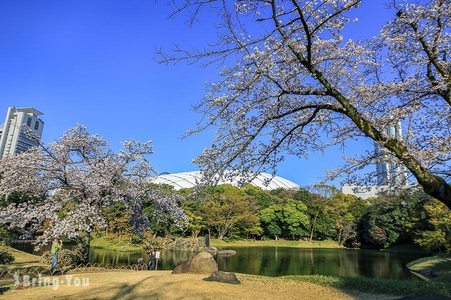 小石川後樂園賞櫻