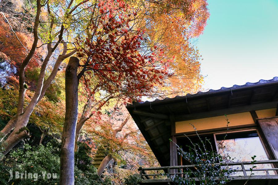 京都瑠璃光院楓紅