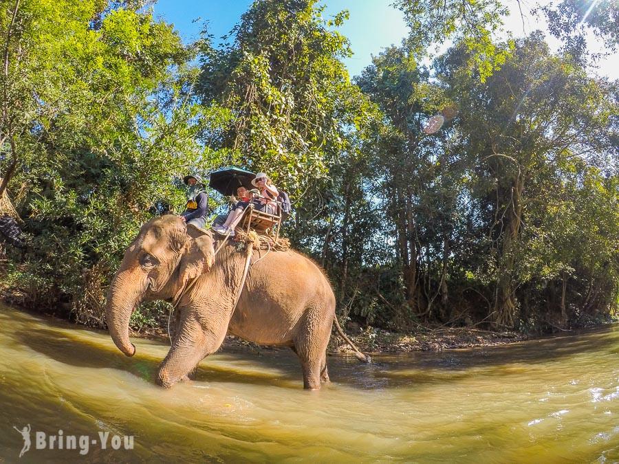 【泰北清邁景點】湄旺一日遊:探索清邁山林、大象、竹筏之旅