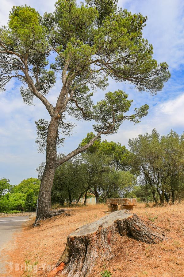 南法聖雷米景點