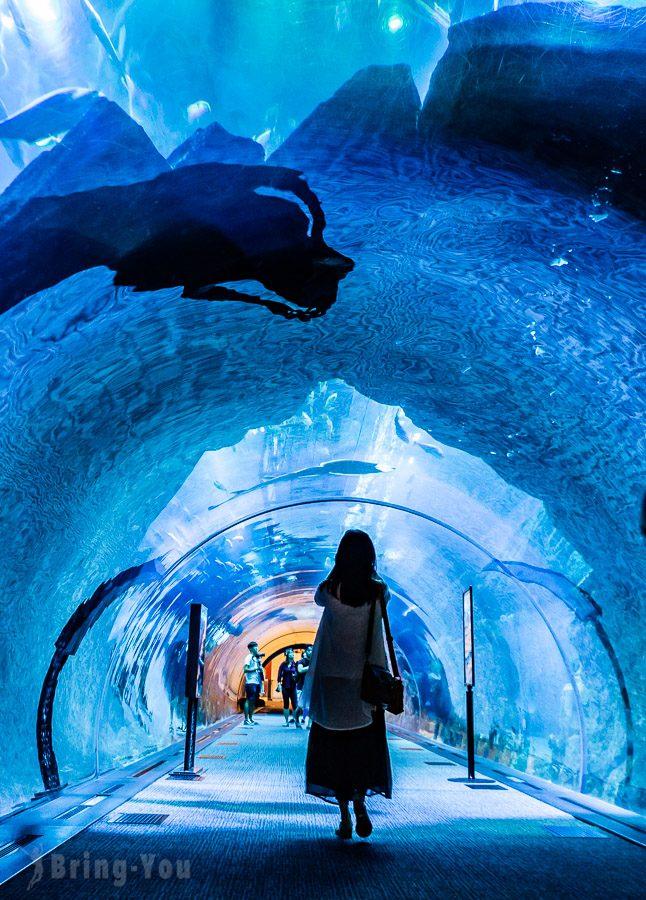 杜拜水族館與水下動物園
