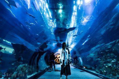 【杜拜逛街景點】杜拜購物中心(Dubai Mall):杜拜水族館&美食&音樂噴泉