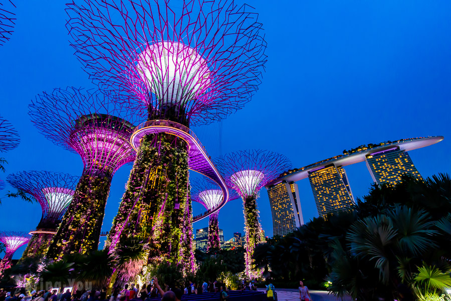 【新加坡濱海灣花園景點】天空樹、空中步道、花穹、霧林溫室怎麼玩(含門票與交通攻略)