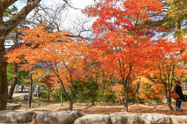 【韓國賞楓自由行】10個首爾楓葉、銀杏景點,紅葉時間預測情報