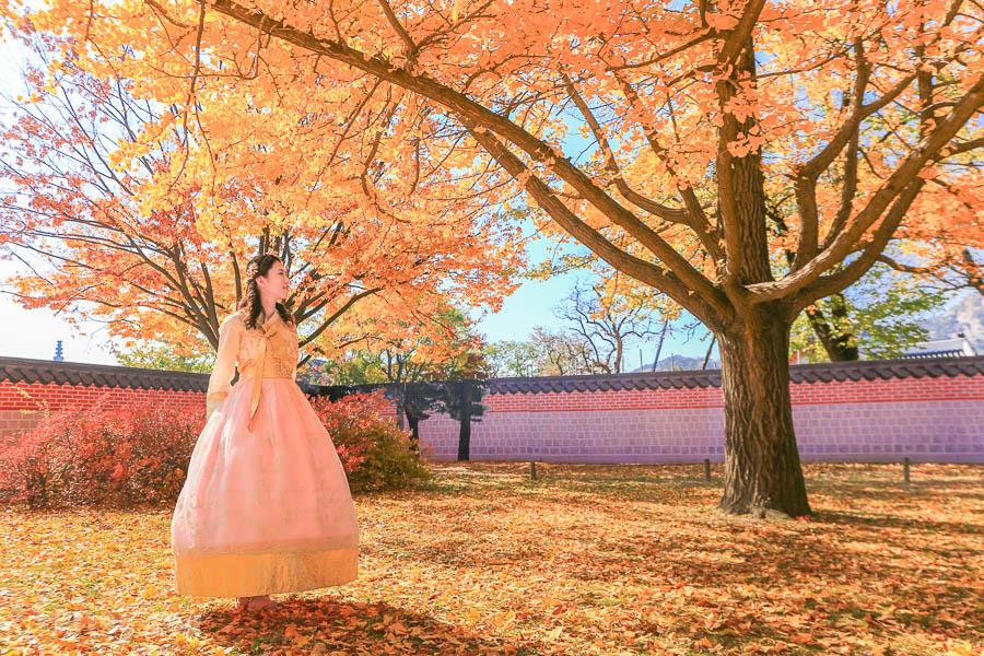 【韓國首爾景點】穿韓服玩景福宮:門票、光化門門將換崗交接時間、交通